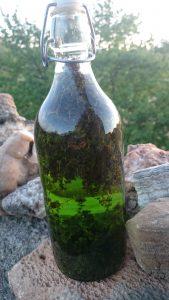 l'alcool fait son effet, le thym donne la couleur de la future liqueur de thym des garrigues