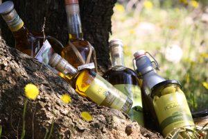 huile olive, olives lucques, pichoine, verdale, olivière en languedoc