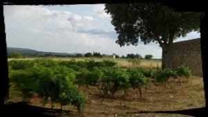 paysage saint jean de fos balade petit train des vignes languedoc oentourisme