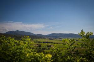 le vignoble daumas gassac sucré salé en languedoc