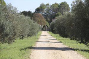 allée oliviers domaine de la grande sieste aniane sucré salé en languedoc